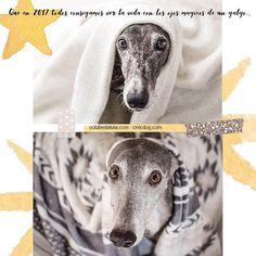 O Clube da Tula y Civic Dog desean que en 2017 todos consigamos ver la vida con los ojos mágicos de un galgo... Tula & Corbusier by @whom.creativestudio #happynewyear #happynewyears #happy2017 #2017 #felizañonuevo #feliz2017 #instagreyhound