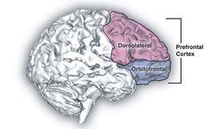 El lóbulo frontal: el director ejecutivo del cerebro