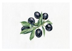 NEW PRINT Olive food Herb Print of от NatalieStorePainting на Etsy