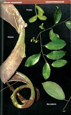 Center For Tropical Forest Science: New field guide describing the lianas of Barro Colorado Island (BCI), Panama