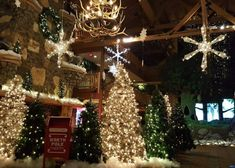 It's Snowland At Great Wolf Lodge! Great Wolf Lodge, Christmas Tree, Holiday Decor, Home Decor, Teal Christmas Tree, Decoration Home, Room Decor, Xmas Trees, Christmas Trees