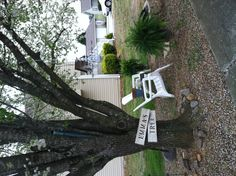 Emma's Tree