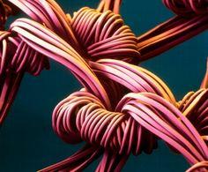 Microscopische foto's van allerlei dingen