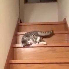 """16.9k Likes, 568 Comments - Animals Videos (@animalsvideos) on Instagram: """"#repost @9gag When motivation of life evaporates... - - 📹 yuto0812127   Twitter #cats #stairs #bored"""""""