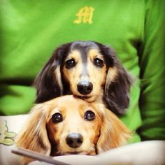 dachshunds 3-my-love-is-saved-for-animals-and-babies-3