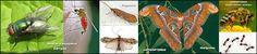 Naturarchives. Biodiversity. Instituto Bidebieta.  Moscas y mosquitos, Tricópteros, Mariposas e Himenópteros