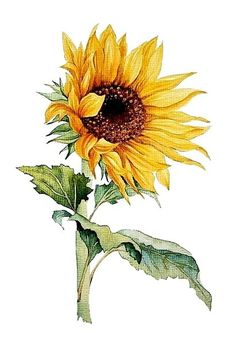 Sunflower Watercolor Painting - Floral Art Print - Watercolor Flower Watercolor Painting Flower Painting Floral Art This is a print from my original watercolor painting ♦ Sizes: ♦ ACEO inches ♦ inches, cm) leaving extra for matting ♦ inches, Sunflower Drawing, Sunflower Art, Sunflower Paintings, Arte Floral, Watercolour Painting, Watercolor Flowers, Drawing Flowers, Sunflower Watercolour, Painting Flowers