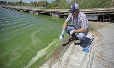 US agency studies how to detect algae bloom outbreaks