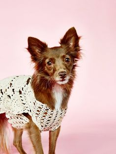 """This season, dress your favorite furry friend in this beautiful crochet sweater. Perfect for the pup with a bark-worthy bohemian style.  Small-Medium: For a dog the size of a French bulldog, pug, beagle Neck Width: 6.25"""" Back Length: 12.75"""" Body Width: 8.5"""" Bottom Opening: 14""""  Medium-Large: For a dog the size of a lab or pitbull Neck Width: 7.25"""" Back Length: 16.5"""" Body Width: 10.5"""" Bottom Opening: 15.5""""  100% Cotton"""