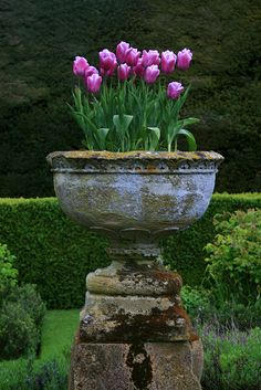 container gardening, landscaping, landscape design, purple flowers, tulips, garden design