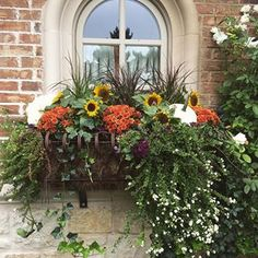 it's finally fall. Now if only the weather would cooperate. 87 and sunny wasn't what I had in mind for fall planting! Fall Planting, Sunnies, Thanksgiving, Weather, Decorating, Halloween, Box, Flowers, Plants