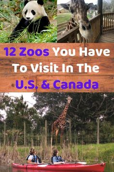 Planning a trip to the zoo? In San Diego and beyond, these U. and Canada zoos have the most unique animals and the best programs and educational opportunities. Family Vacation Spots, Best Family Vacations, Family Vacation Destinations, Family Travel, Vacation Ideas, Travel Destinations, Weekend Getaways With Kids, Kids Zoo, Short Vacation