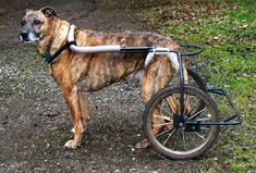 home made dog wheelchairs