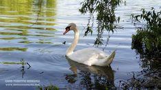Informatii Delta Dunarii - Ghid ... Birds, Bird