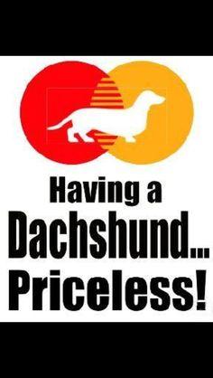 Dashound
