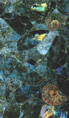 labradorite countertop with embedded ammonites - for the kitchen or master bath (wonder if it's same as Aphrodite granite? Kitchen Countertops, Wood Backsplash, Backsplash Ideas, Countertop Materials, Stone Slab, Ammonite, Rocks And Minerals, Fossils, My Dream Home