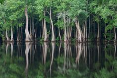 trees, water