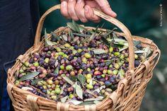 Olive Taggiasche Olio DOP Riviera Ligure #Liguria