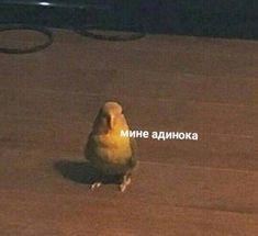 a parrot- попугай mine adinoka - Stupid Memes, Dankest Memes, Funny Memes, Meme Pictures, Reaction Pictures, Hello Memes, Happy Memes, Russian Memes, Cute Love Memes