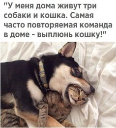 Kittens Being Sold Online For Fighting Dog Bait Clever Quotes, Funny Quotes, Funny Memes, Animals And Pets, Funny Animals, Cute Animals, Animal Funnies, Russian Jokes, Small Kittens