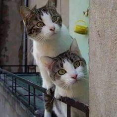 Inquisitive Curious always ......