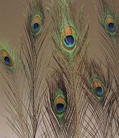 Bulk peacock feathers for wedding decor and centerpieces.