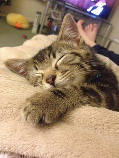 oh you're so comfy! via @EmrgencyKittens