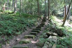Planning on Hiking in the Cook Forest State Park