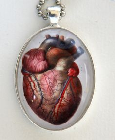 Anatomical Heart BIG NECKLACE 40x30mm glass pendant vintage Victorian Medical Drawing anatomy psychobilly gothic punk steampunk. $9.99, via Etsy.