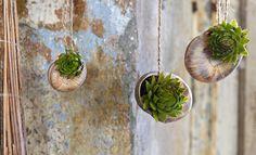 Aprenda Como Plantar Suculentas
