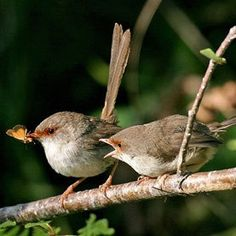 bird and egg cave art | Wrens sing to their unhatched eggs to teach the embryo inside a ...
