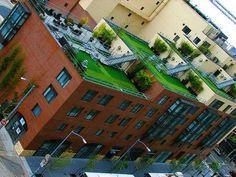 9-23-08 rooftop garden.jpg     Rooftop gardens!