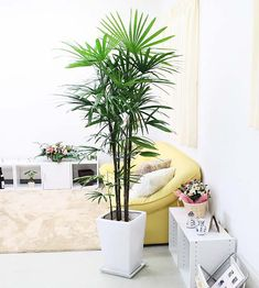 bloom-s: Stylish! Bamboo Palm, Leaf Coloring, Global Market, Houseplant, At The Hotel, Plates And Bowls, Earthenware, Feng Shui, Hemp