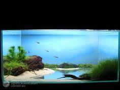 ROAPLC 2011 | AQUABR #TropicalFishAquariumIdeas
