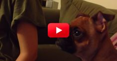If You Don't Think Pets Have Feelings, Watch This Dog's Reaction To A Sad Scene In The Lion King! | The Animal Rescue Site Blog