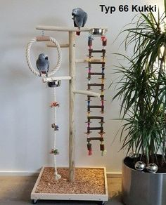 New Absolutely Free Pet Birds toys Ideas If you share your daily life — and ho… – Bird Supplies Diy Parrot Toys, Diy Bird Toys, Parrot Perch Diy, Budgie Toys, Parakeet Toys, Diy Cockatiel Toys, Parrot Stand, Bird Stand, Bird Play Gym
