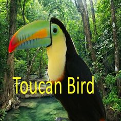 Jungle Animals: 20 Tropical Rainforest Animals That Make Thick Forest –. Jungle Lion, Jungle Animals, Rainforest Animals, Amazon Rainforest, Gladiator Costumes, Best Android, Android Apps, Nile Crocodile, California Costumes