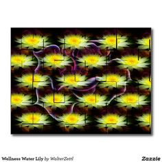 Wellness Water Lily Postcard