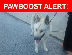 Is this your lost pet? Found in Louisville, KY 40258. Please spread the word so we can find the owner!  White German shepherd/husky/artic wolf  Nearest Address: Near Azalea Ln & Poinsettia Dr