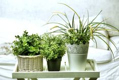 Adding house plants is a simple way to bring the outdoors in and increase feelings of calm and relaxation, perfect for the bedroom. Choose plants with air purifying qualities that can aid better sleep including Pothos, Peace Lily and Aloe Vera. Container Gardening, Gardening Tips, Suculentas Interior, Plantas Indoor, Decoration Plante, Spider Plants, Snake Plant, Aquaponics, Live Long