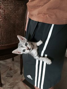Yoda ... As a kitten! She was small enough to fit in a pocket