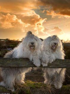 Sophie e Sarah: as duas cadelas mais conhecidas da Holanda   Green Savers