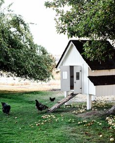 If someone wants to raise chickens, it's a good idea to make certain they build a coop that is best suited for their own needs. Be sure you get the best plans to be able to construct your own. Portable Chicken Coop, Backyard Chicken Coops, Diy Chicken Coop, Chickens Backyard, Chicken Feeders, Backyard Ideas, Garden Ideas, Best Egg Laying Chickens, Raising Chickens
