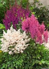 Plants, Gardens, Outdoor Gardens, Plant, Garden, House Gardens, Planets