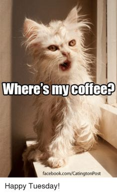 Check this our, 20 new memes about tuesday mornings.lot of fun New Memes, Funny Cat Memes, Funny Cats, Funny Animals, Cute Animals, Hilarious, Tuesday Meme, Saturday Memes, Happy Tuesday