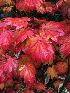 Des couleurs d'automne plein les yeux aux Journées des Plantes de Domaine de Chantilly (officiel) http://www.pariscotejardin.fr/2015/10/des-couleurs-dautomne-plein-les-yeux-aux-journees-des-plantes-de-chantilly/#more-36541