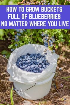 How to grow buckets full of blueberries no matter where you live 50 stunning diy spring decoration ideas for your yard and garden decoration diy garden ideas spring stunning yard Home Vegetable Garden, Fruit Garden, Edible Garden, Beginner Vegetable Garden, Fruit Plants, Flowering Plants, Garden Soil, Garden Care, Growing Plants
