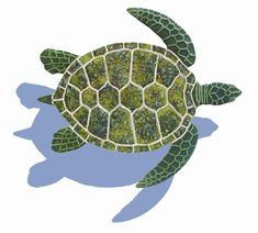 Google Image Result for http://www.mosaic.pro/images/products/detail/GT7SHGreenSeaTurtlewithShadow.jpg