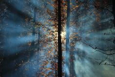 Photo en busca de la luz by Miguel Lopez De Haro on 500px