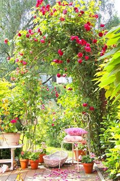 Love the roses and vintage garden chair